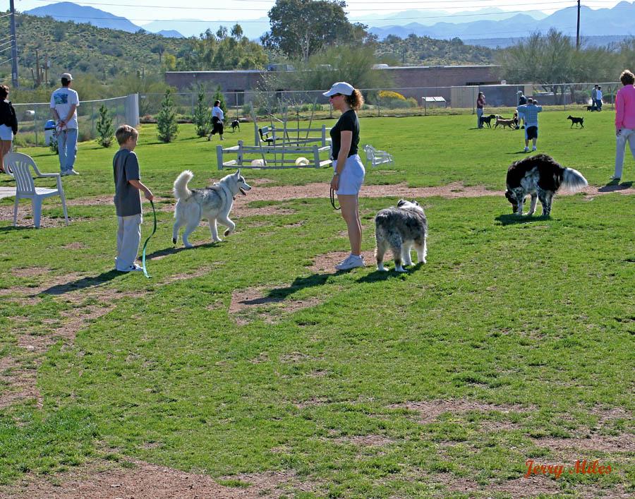 Dog Food Colorado Springs